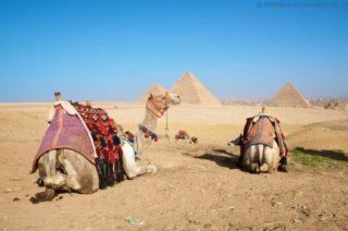pyramiden-von-gizeh-kamele