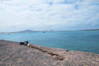 mein-schiff-4-reisebericht-fuerteventura-84
