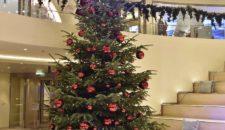 Weit über 100 Weihnachtsbäume an Bord der AIDA Schiffe