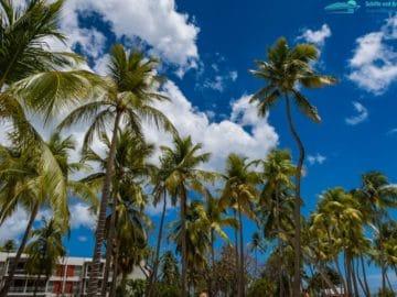 Strand Sainte Anne Guadeloupe