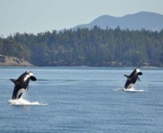 Alaska Kreuzfahrten © Royal Caribbean International