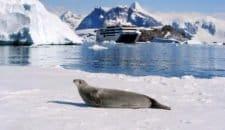 Ponant Yachtkreuzfahrten und National Geographic Expeditions machen gemeinsame Sache