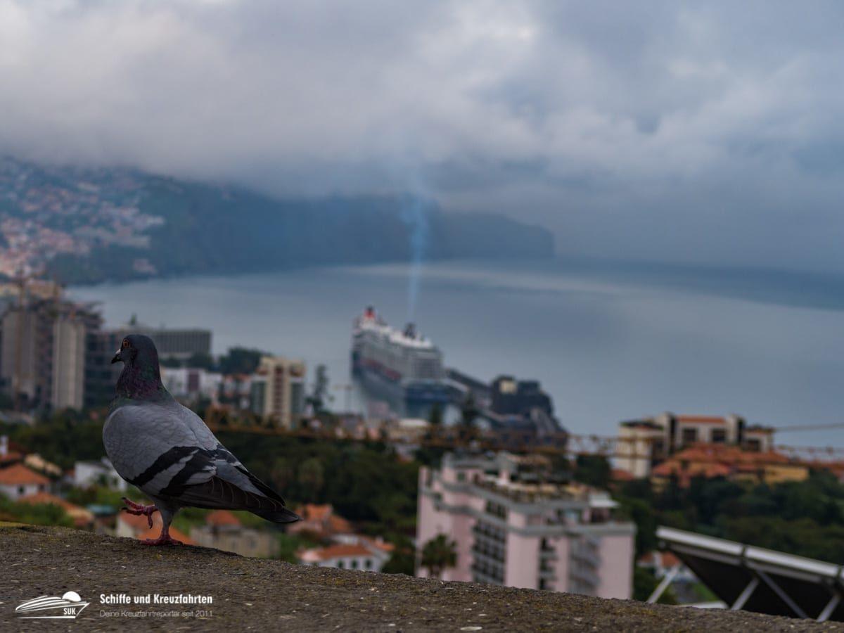 Kanaren-Kreuzfahrt: Darum fahren AIDA Cruises, TUI Cruises & Co. NICHT nach Madeira!