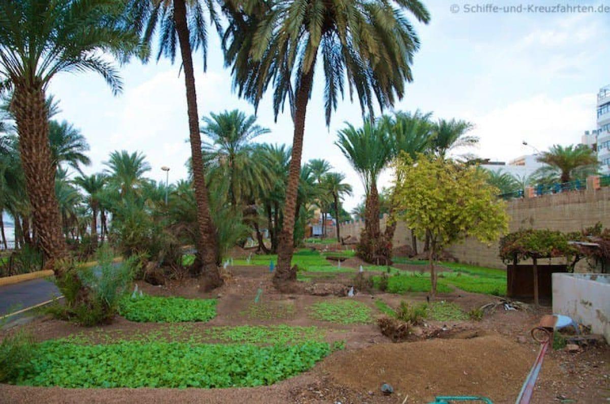 aqaba-plantage-am-strand